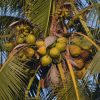ココナツを使ったバングル